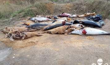 Dead Dolphins Stockpiled in French Coastal Town