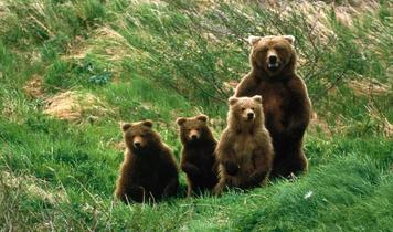 The Abruzzo Bear - a millennium of peaceful co-existence