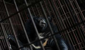 Vietnam's systematic abuse of bears tackled with shocking online campaign
