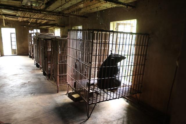 Bile Bears Cages