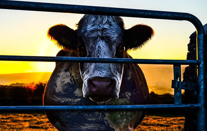 Cowspiracy Cow_opt