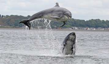 Broad Scottish Alliance Unites In Support Of Dolphins