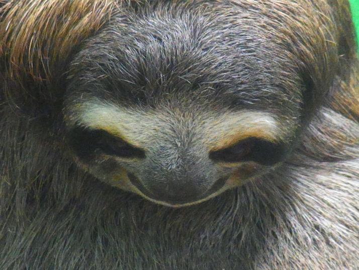 Giant Sloth © Chris Redston