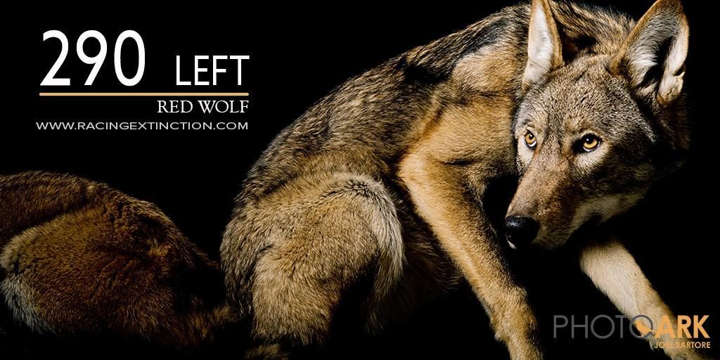 Wolf_Twitter