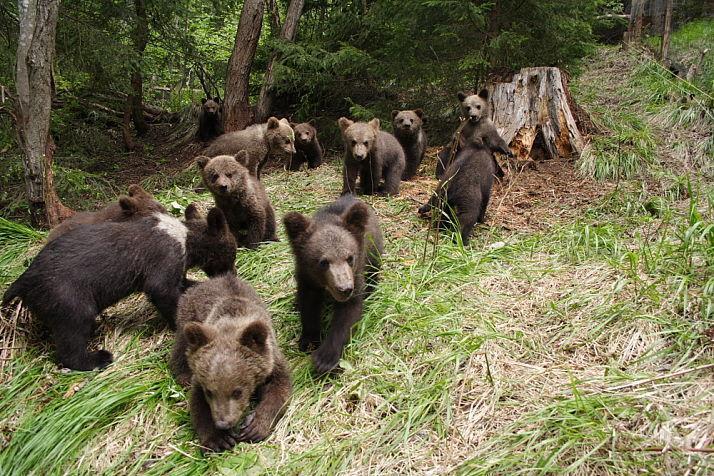 bear_opt