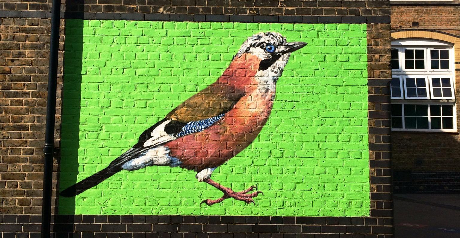 bird jay