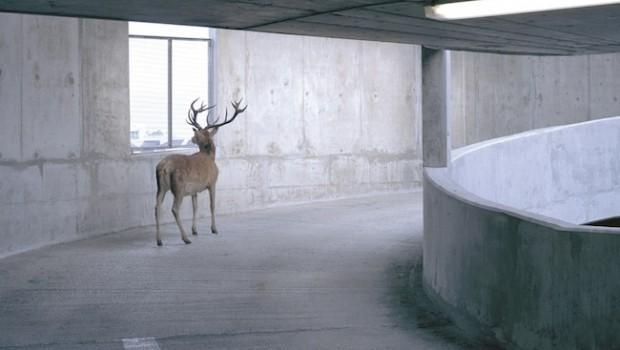 deer car park