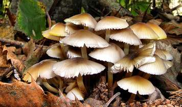Mysterious mushroom mixture set to boost reforestation of the Highlands