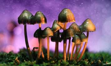 Legalise magic mushrooms now!