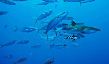 Open Letter to the Costa Rican Ambassador on Shark Finning