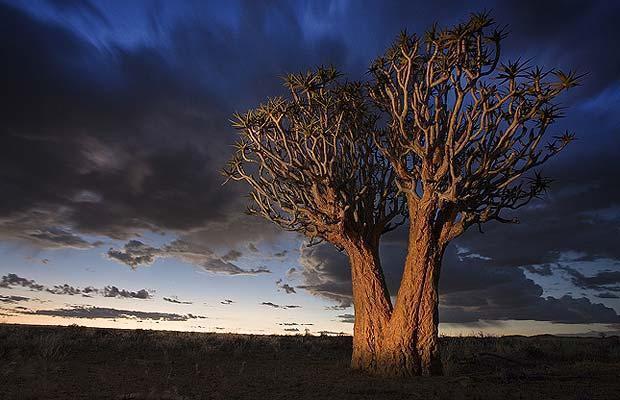 quiver_tree