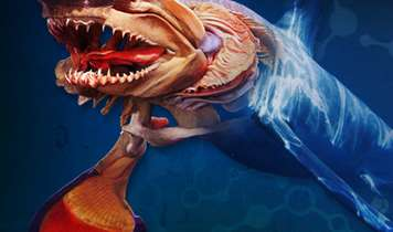 Sea Creatures Exhibition Brings Creatures of the Deep to Land in the UK