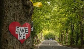 Love Pushes People to Protect Sheffield's Street Trees