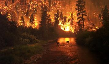 To stop the global wildfire catastrophe - plant billions of trees