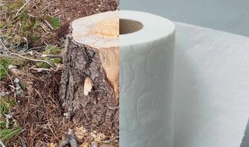 Don't go with Charmin toilet paper