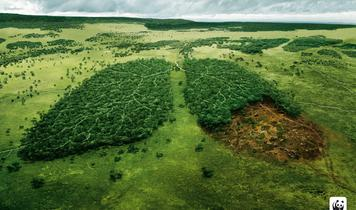 A Trillion Trees To Take On Climate Breakdown!