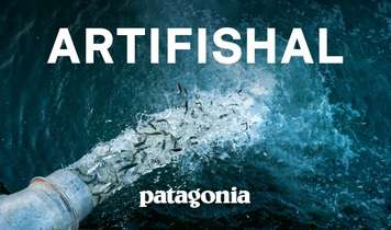 Artifishal - the fight to save wild salmon