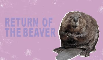 Can beavers help Somerset avoid another flooding catastrophe?