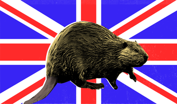 The rightful return of the beaver to Britain