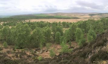 Natural regeneration key to doubling Britain's woodlands
